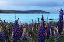 Der Lake Tekapo behält seine türkise Farbe auch bei schlechtem Wetter
