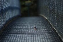 Die Hängebrücke am Kepler Track
