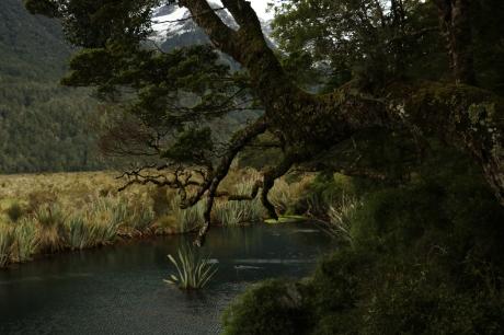 """Der """"Mirror Lake"""" auf dem Weg zum Milford Sound"""