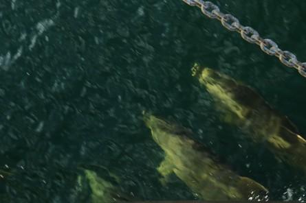 Delfine! und ganz schön viele.